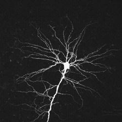 neuron_Branch