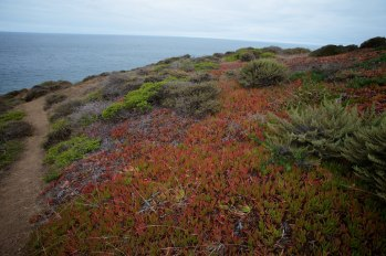The beauty found hiking The Marin Headlands