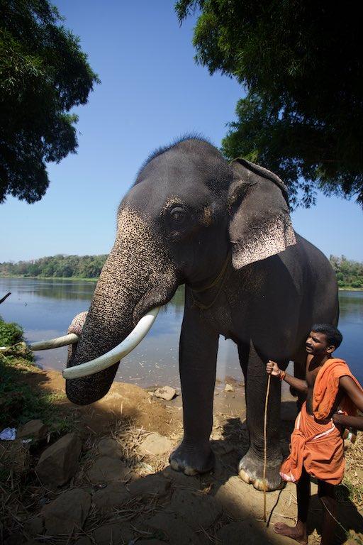 Elephant story 17