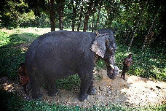 Elephant story 19