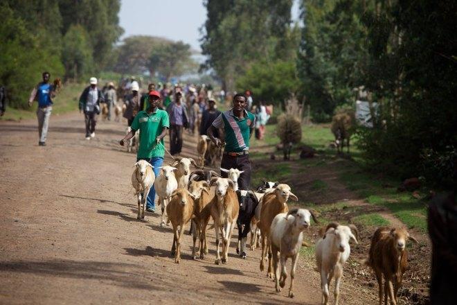 Ethiopia 14