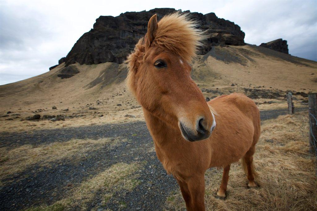 Traversing Icelands Reynisfjara, Skaftafell and Hvannadalshnúkur 9