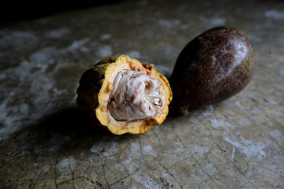 Cacao from Chapas, Mexico