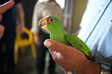 Ponchita, the parrot with personality.
