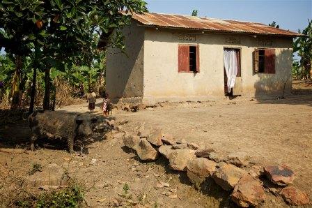 The Uganda countryside 35
