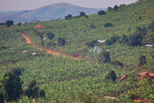The Uganda countryside 40