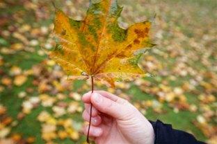 Tessa holding a beautiful leaf