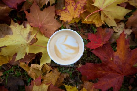#cupofmornings in Wright Park from Bluebeard Coffee in Tacoma