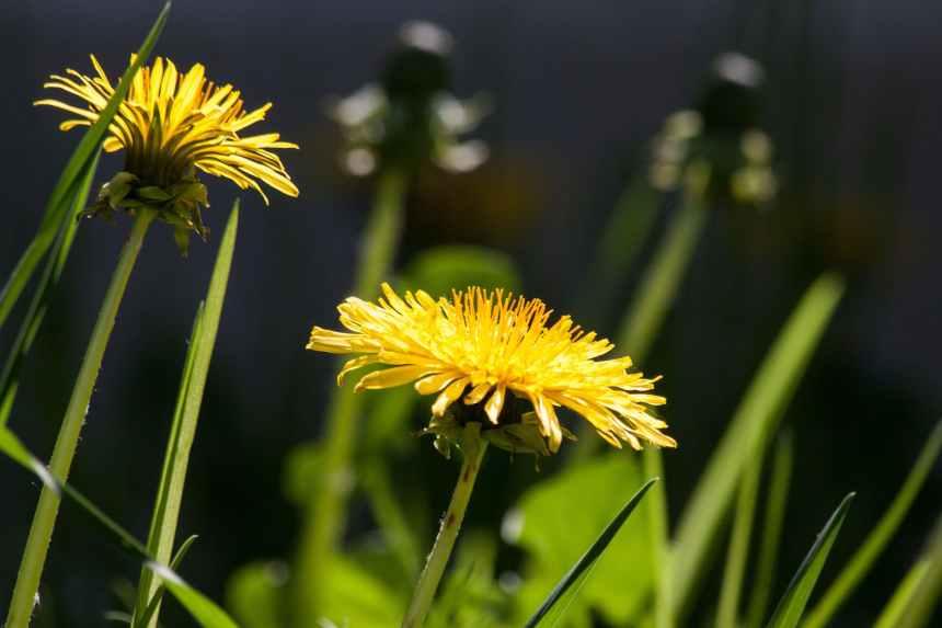 flowers summer yellow plant