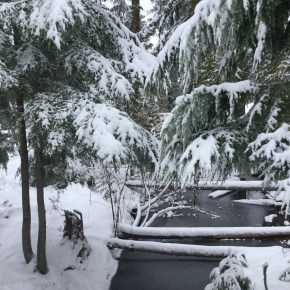 giverny homestead winter update
