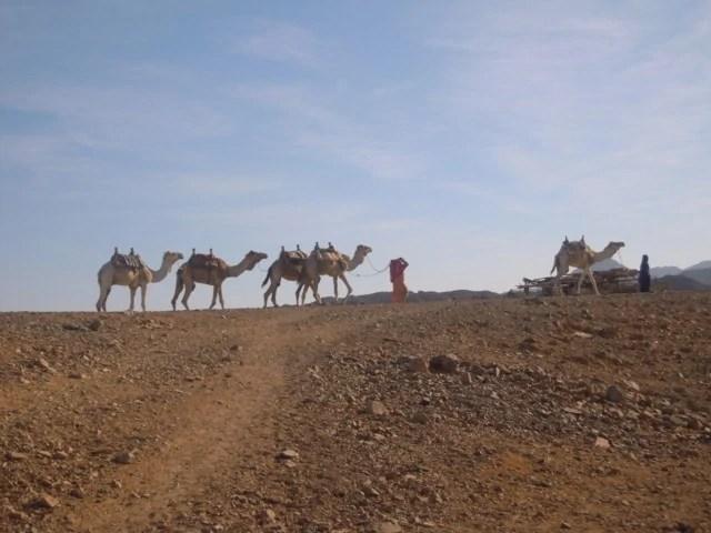 Consigli Vacanza a Sharm el Sheikh