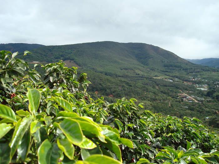 Los principales países productores de café del mundo: lo mejor de la semana