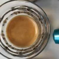 ¿Cuáles son las mejores cápsulas de café compatibles con Nespresso en 2017 y 2018? ¿Cuál es el mejor café Nespresso?