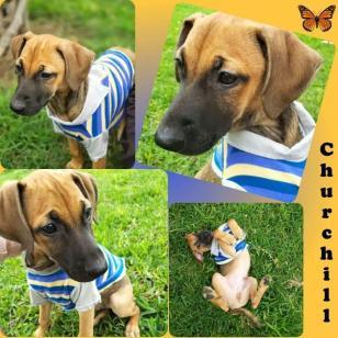 perro-en-adopcion-lima-1571867146