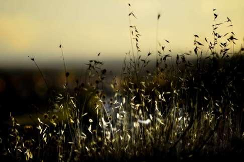 lrpix5-sunset-field