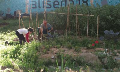 aliseda-18-huerto-urbano-madrid