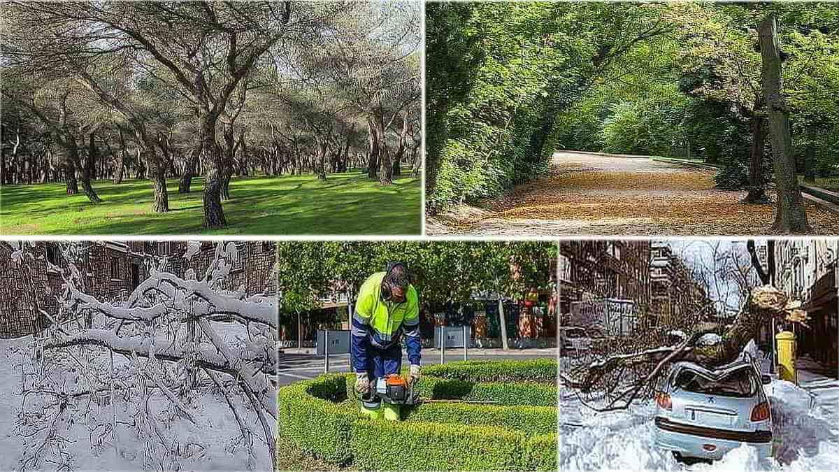 jardineras-arboles-filomena