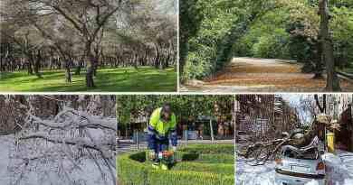Carta de los jardineros y jardineras al Ayuntamiento de Madrid