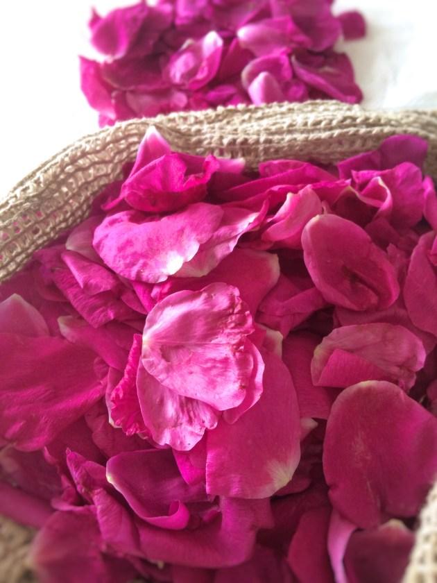 【恋するフィトケミカルvol.8】ハマナスの無常の香り
