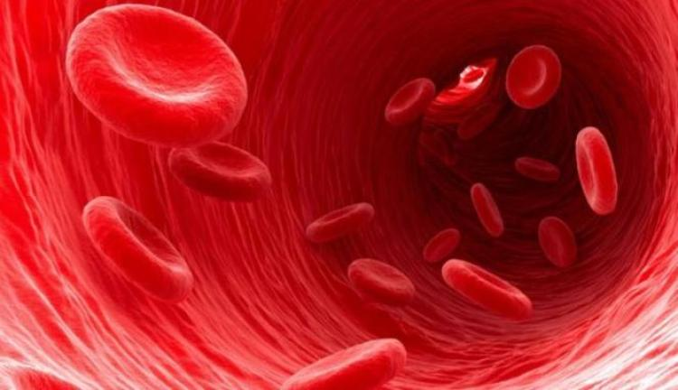 peredaran darah besar dan kecil sirkulasi darah