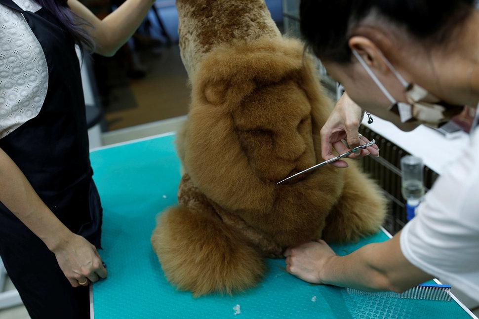 Salon Binatang