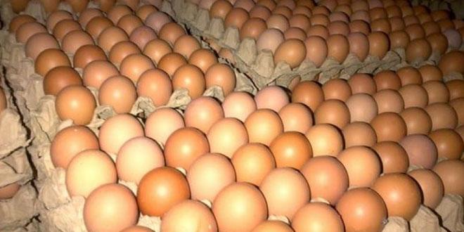 Usaha Ayam Petelur Menggiurkan
