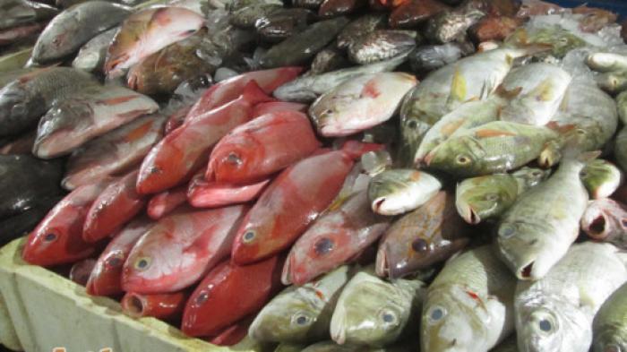 Menentukan Jenis Ikan
