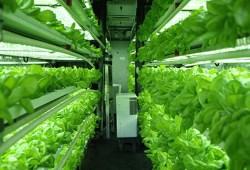 Indoor Farming Indonesia, Solusi Pertanian Masa Depan yang Produktif