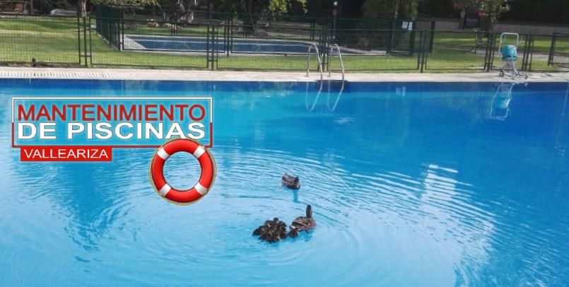 Keys to pool maintenance • Caral Group