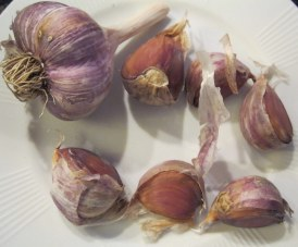 Black Russian garlic bulb and cloves