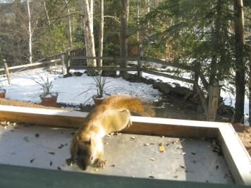 squirrels can be a big problem at bird feeders