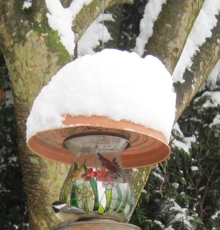 Chickadee at feeder in winter