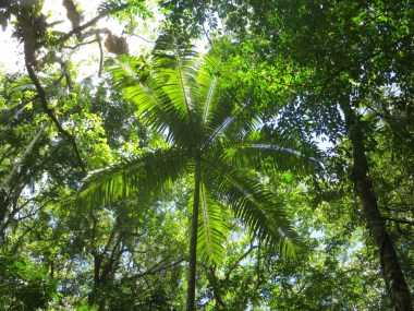 UNESCO World Heritage Centre, Daintree Rainforest, Queensland, Australia