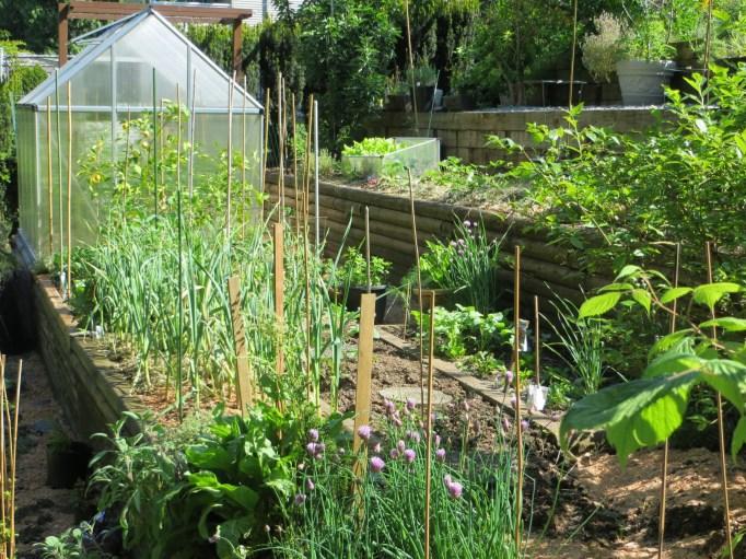 Home garden in Summer