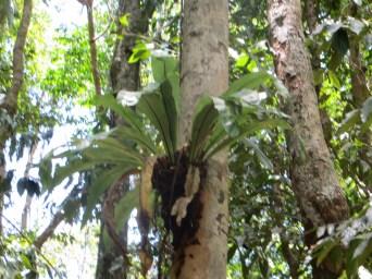 Tree ferns - Daintree