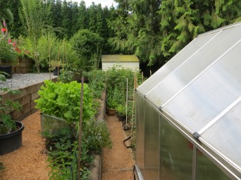 Room for a greenhouse & coldframe