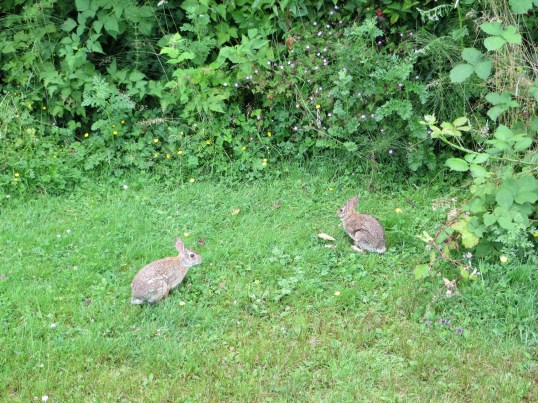 Rabbits seem to like grass & flowers