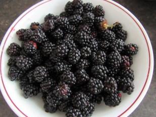Fresh blackberries = delicious dessert