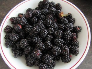 Fresh blackberries = delicious dessert