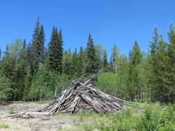 Old brush pile