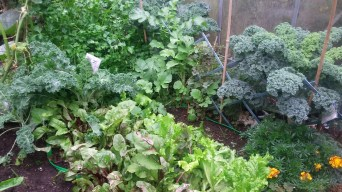 The veggie garden in Fall
