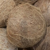 Fresh imported coconuts available all year