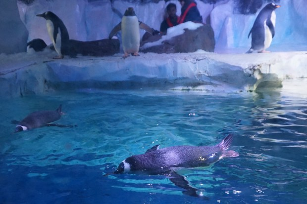 Where can I see penguins in Birmingham?