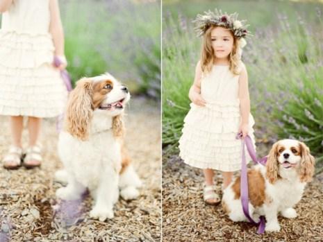 Baonilha + casamento lavanda + daminha com cachorro