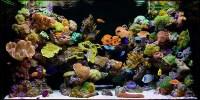 cara membuat aquarium air laut