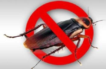 pembasmi kecoa dan cara menghilangkan kecoa