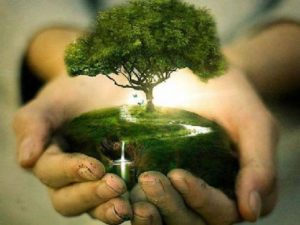 menanam pohon cara mencegah pemanasan global