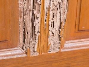cara mengatasi rayap di kusen pintu