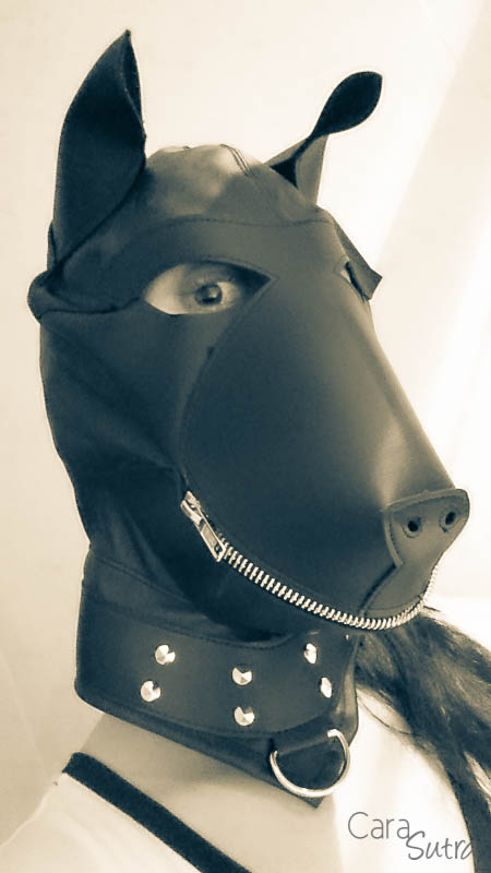 puppy hood phone pics cara sutra review-10