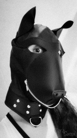 puppy hood phone pics cara sutra review-8